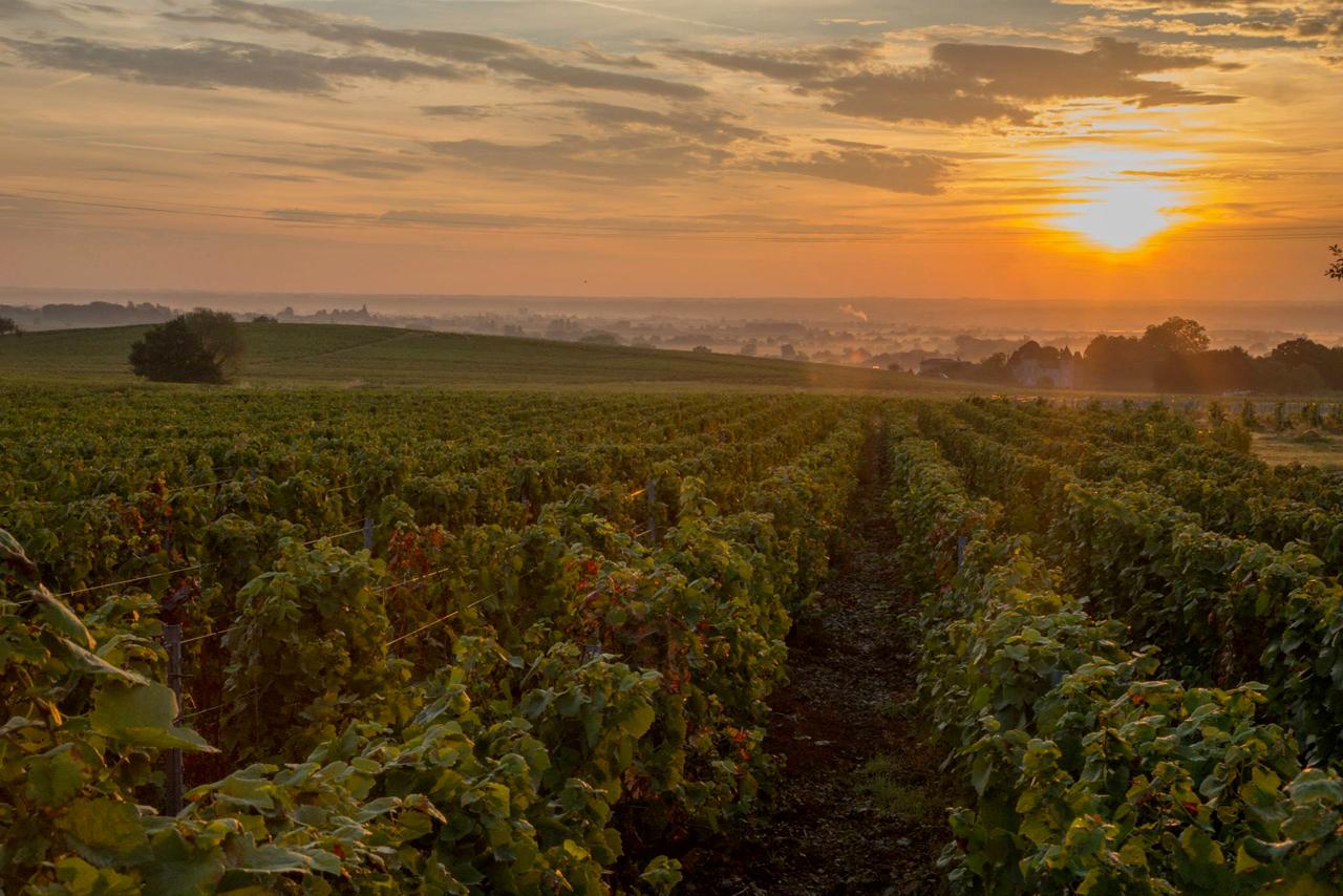 Coucher-soleil-vigne