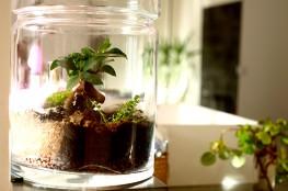 desplantessurlacomete-deco-plante