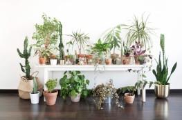 maisonbouture-deco-plantes1
