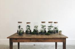 onno-deco-plante