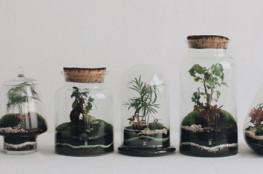 Onnorium_déco_terrarium