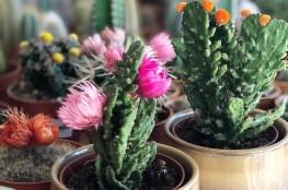 LittleLiamone_déco_plantes4