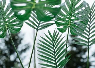 GreenFriday