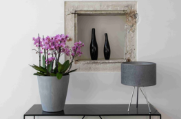 OriCine -deco-art-de-vivre-interieur-pot-connecte-orchidee