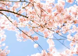 printemps_fleurs_ciel