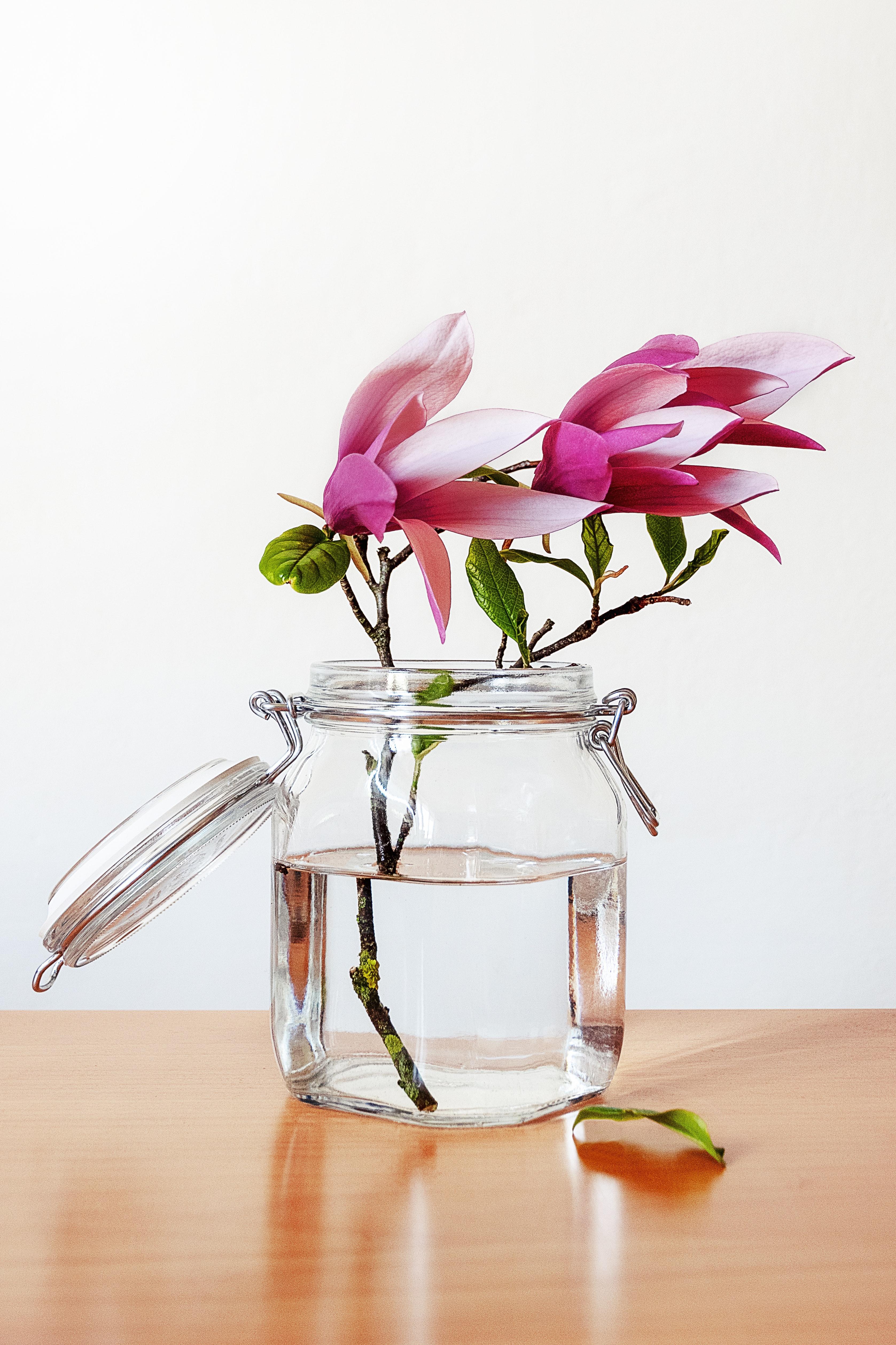 printemps_pot_fleurs